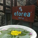 The must-try spa