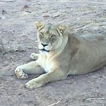 Aquila Private Game Reserve