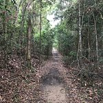 Iluka Rainforest Walking Track
