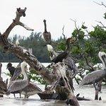 Bird life hanging out on sandbar