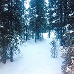 Photo de Mountaineer Lodge