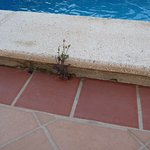 More Weeds around the Pool