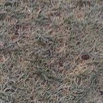 Crunch grass