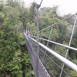 Waiohine Gorge Suspension Bridge