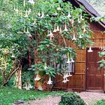 Photo of Malee's Nature Lovers Bungalows