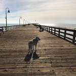 The Adventure Dog checking out the pet friendly Ventura Pier