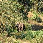 Foto de Baanchang Elephant Park - Private Day Tours