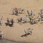 Wildlife in Tsavo National Park