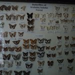 Butterfly musuem next to Gede Ruins
