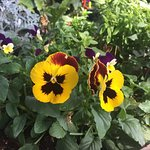 ดอกไม้หน้าพระตำหนักดอยตุง