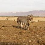 Заповедник Хай-Бар - дикие ослы