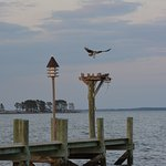 Osprey nest at the end of our fishing dock.