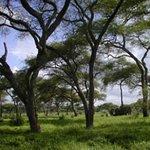 Photo of Ruaha National Park