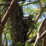 Foto de Punta Culebra Nature Center
