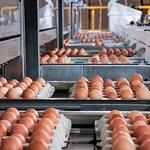 Tamarix Poultry Farm