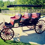 Schedule a romantic Horse and Carriage Ride!
