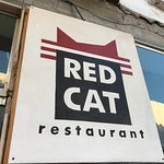 Photo of Red Cat