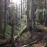 Photo of Little Qualicum Falls Provincial Park