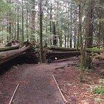 MacMillan Provincial Park Foto