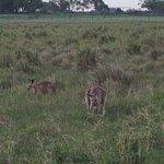 Photo of Henderson Park Farm Retreat