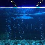 Photo of Mint Club