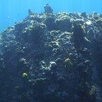 Snorkeling at Anse Mamin