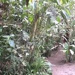 Photo de Cabanas Armonia y Jardin de Orquideas