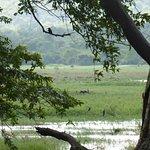 Wetlands bordering the property