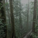 Canopy walk, Ulu2 Temburong. Untouch forest reserve, morning climb with fresh air with natural m