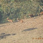 wild dogs seen from Periyar boat ride