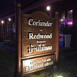 Coriander in Redwood