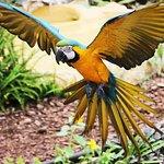 Presentación de aves exóticas en La Hondonada