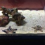 Photo de ABQ BioPark Aquarium