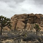 Nearby Joshua Tree National Park