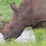 rinocerontes também... adorei!