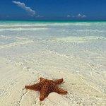 Club Peace & Plenty Exuma Island Foto