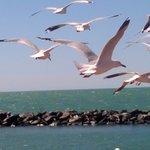 birdlife: birds go where the fish are