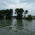 Pandansari Mangrove Forest