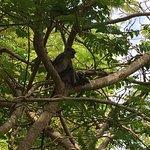 Lots of monkeys in the trees