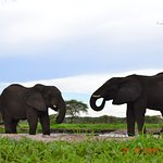 Elephants from the bunker