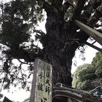 Photo of Gokurakuji Temple