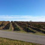 Grape Creek Vineyards Fredericksburg