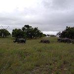 Photo of Nkomazi Game Reserve
