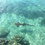 A nurse shark passing by at the beach