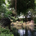Regnskov søen