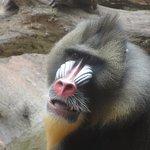 Photo de Gladys Porter Zoo