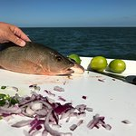 the mangrove snapper that was about to be cheviche
