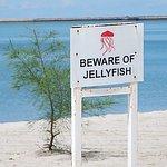 海では泳げないです