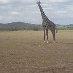Photo of Big Time Safari Camp