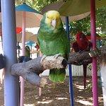 Luv this bird!